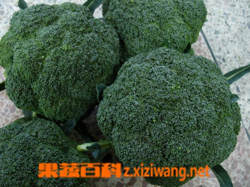 果蔬百科青花菜